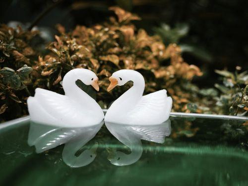 stilllife macros swan