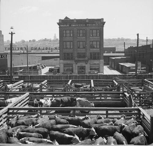 stockyards livestock beef