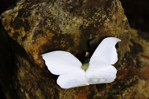 stone butterfly tombstone