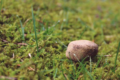 stone ground mossy