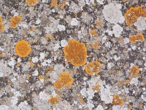 stone weave orange