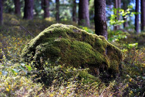 stone bemoost forest