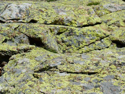 stone lichen rock lichen