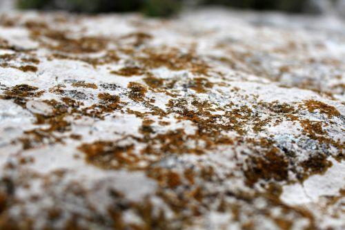 stone macro lichen