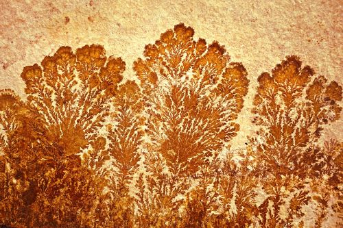 stone fossil dendrites