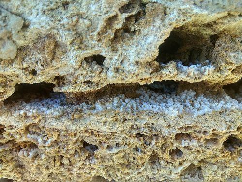 stone coquina brick