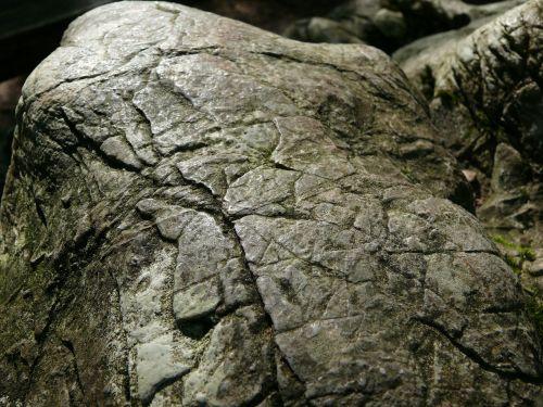 stone beech beech hg
