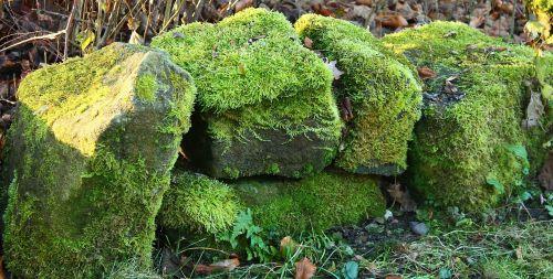 stone wall green