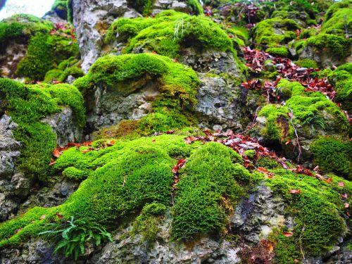 stone moss bemoost