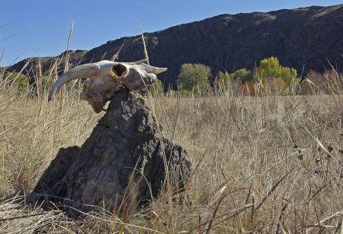 stone skull steppe