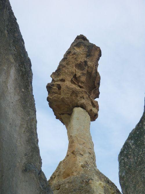 stone rotten mushroom