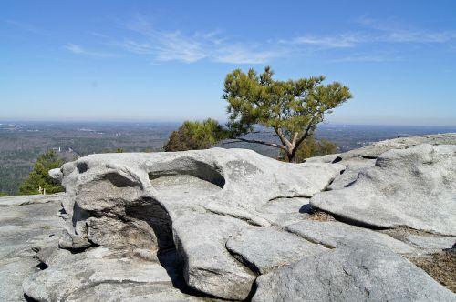 stone floor rock tree