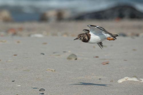 stone waltz bird beach
