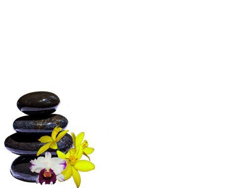 stones orchids composition
