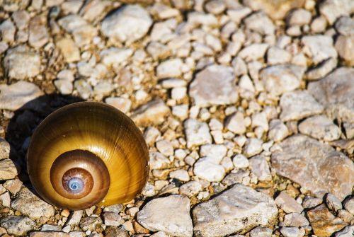 akmenys,sraigė,spalva,spiralė,jūros akmenys,fotografija,mažas,gražus,gamta,sraigės,raižyti akmenys