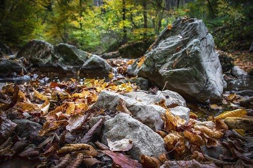 stones  autumn  stream