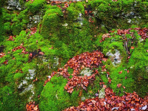 stones leaves autumn