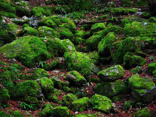 stones bemoost green
