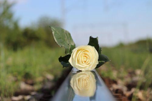 stop children suicide white rose school stress