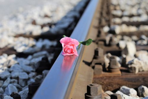 stop children suicide stop teenager suicide pink rose on railway