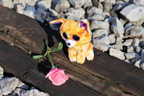 stop children suicide sad kitty on rail stop teenager suicide