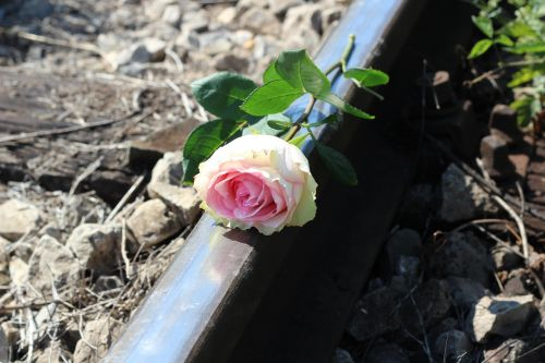 stop teenager suicide white pink rose railway