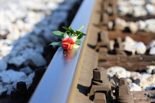 stop youth suicide yellow red rose on railway stop student suicide