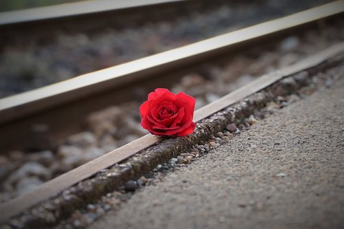 stop youth suicide  red rose near rail  remembering all victims