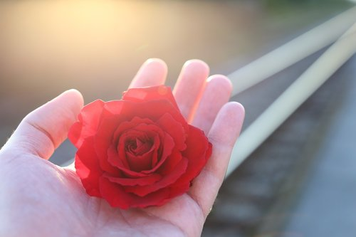 stop youth suicide  railway  red rose in hand