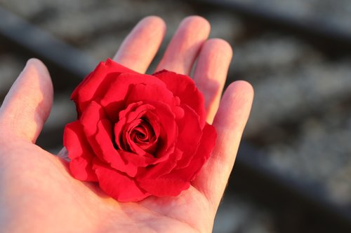 stop youth suicide  red rose in hand  railway