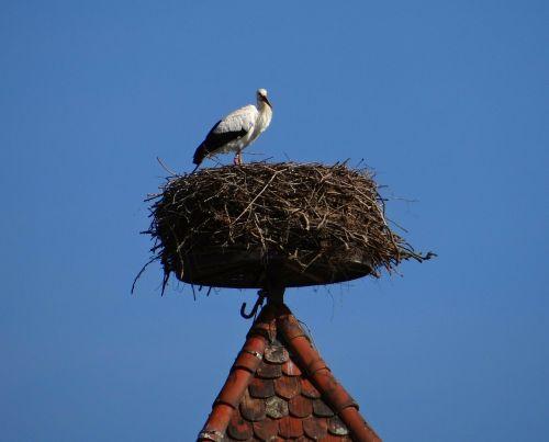storchennest stork bird