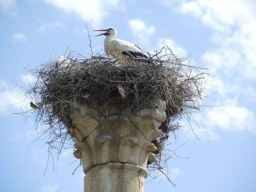 storchennest stork morocco