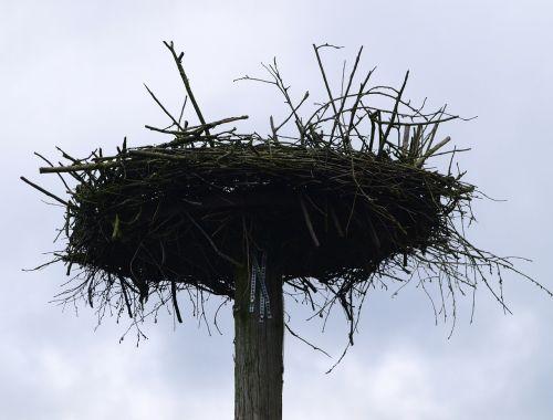storchennest bird nest