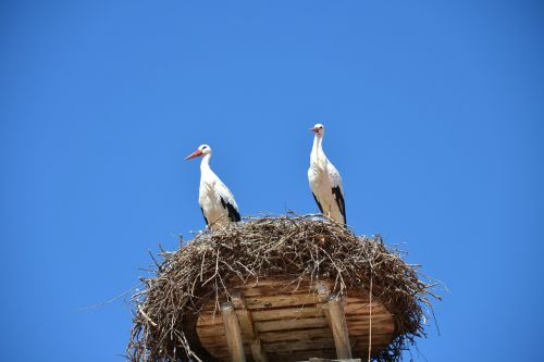 storchennest nest stork