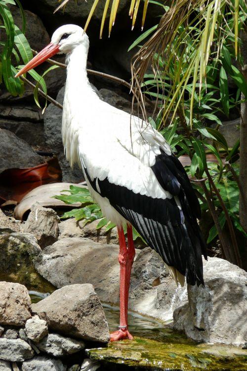stork storks migratory birds