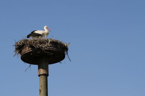 stork storchennest adebar