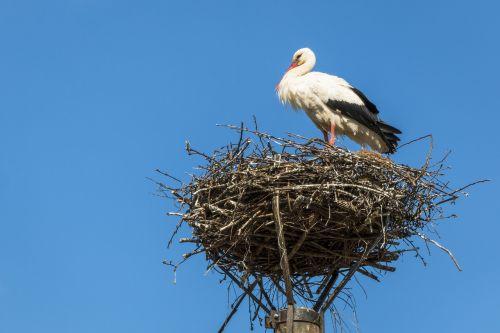 stork nest bird