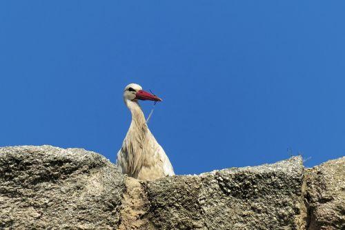 stork bird spain
