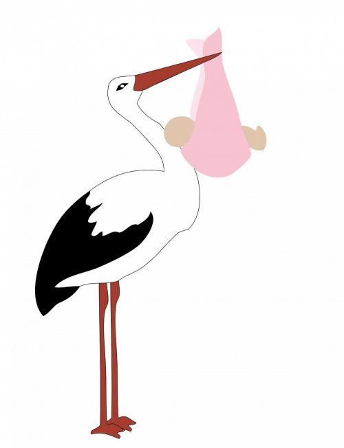stork baby girl