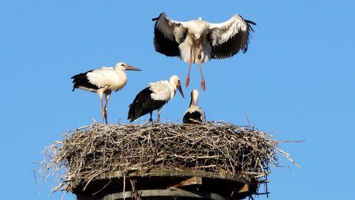 stork flight exercise storchennest