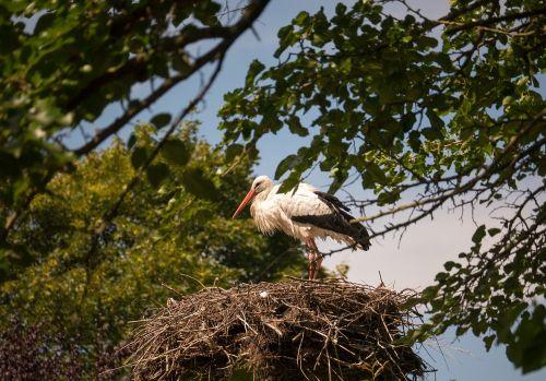 stork animals bird