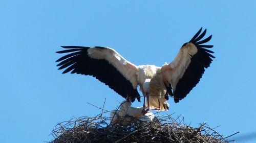 stork alsace strasbourg