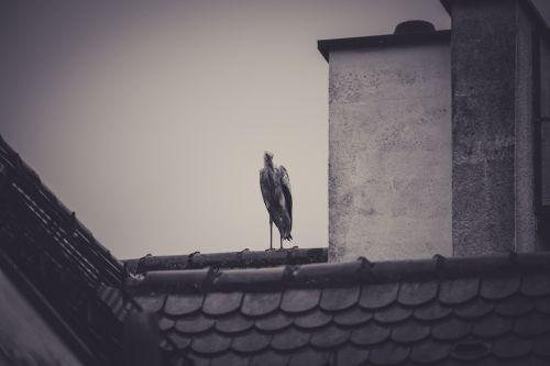 stork roof rattle stork