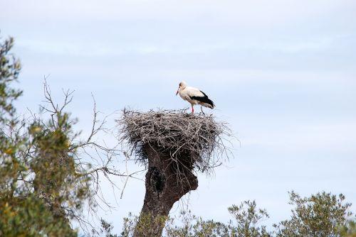 stork bird alsace