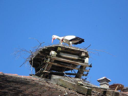 stork rattle stork rattle