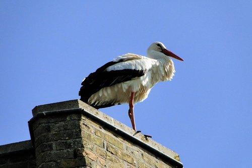 stork  animal  bird