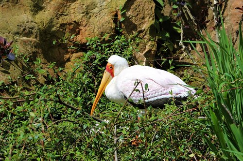 stork  bird  beak