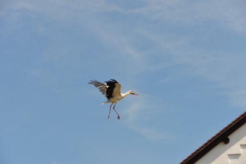 stork white stork rattle stork