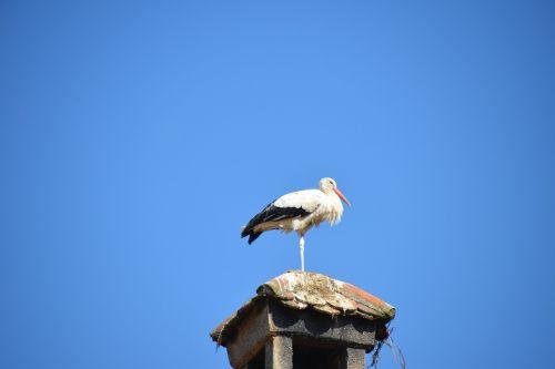 stork bird animal