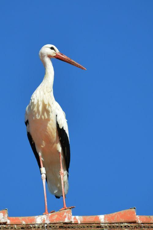 stork roof pride